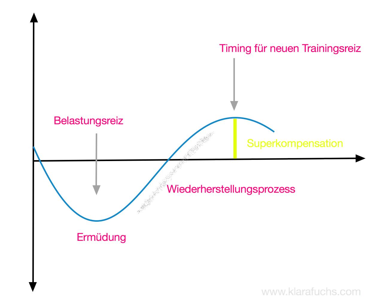 Superkompensation-überkompensation-trainingswissenschaft-klara-fuchs-fitness-blog-fitnessblog-blogger-österreich
